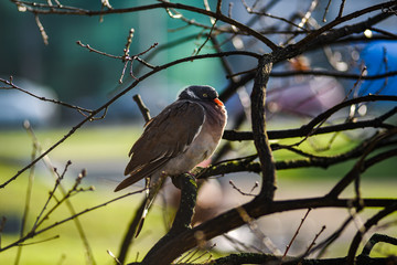Pigeon sitting on a tree branch on a sunny autumn day.