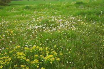 Wandern in Thüringen, Wildblumenwiese