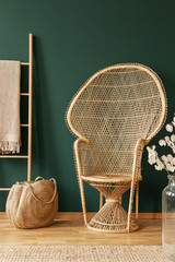 Scandinavian ladder with blanket next to rattan peacock chair in elegant room with green wall and wooden screen and floor, real photo with copy space