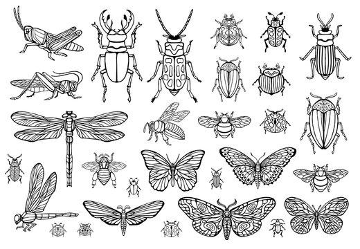 Big hand drawn line set of insects bugs, beetles, honey bees, butterfly moth, bumblebee, wasp, dragonfly, grasshopper. Silhouette vintage sketch style engraved illustration.