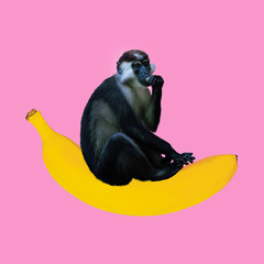 Minimal Contemporary collage art. Monkey sitting on a banana. Fun art