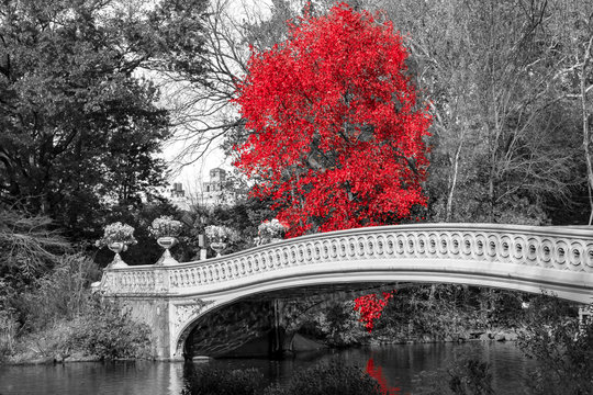 Red tree at Bow Bridge in Central Park fall landscape scene in New York City