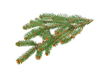 Green fir branch for christmas, isolated on white background.