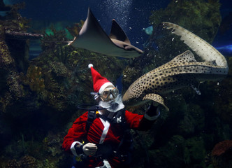 A diver dressed as Santa Claus feeds a zebra shark inside a fish tank at the Malta National Aquarium in Qawra