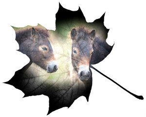 wild horses double exposure on a leaf