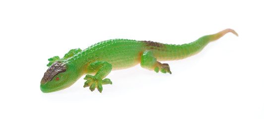 lizard isolated on a white background