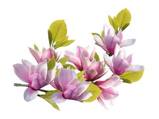 Keuken foto achterwand Waterlelies Beautiful blooming magnolia flower bouquet isolated on white background.