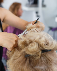 Hands of hairdresser making hairstyle for female