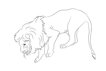 vector illustration of a lion who stands, vector