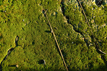 Green and grunge moss texture with sunset light.