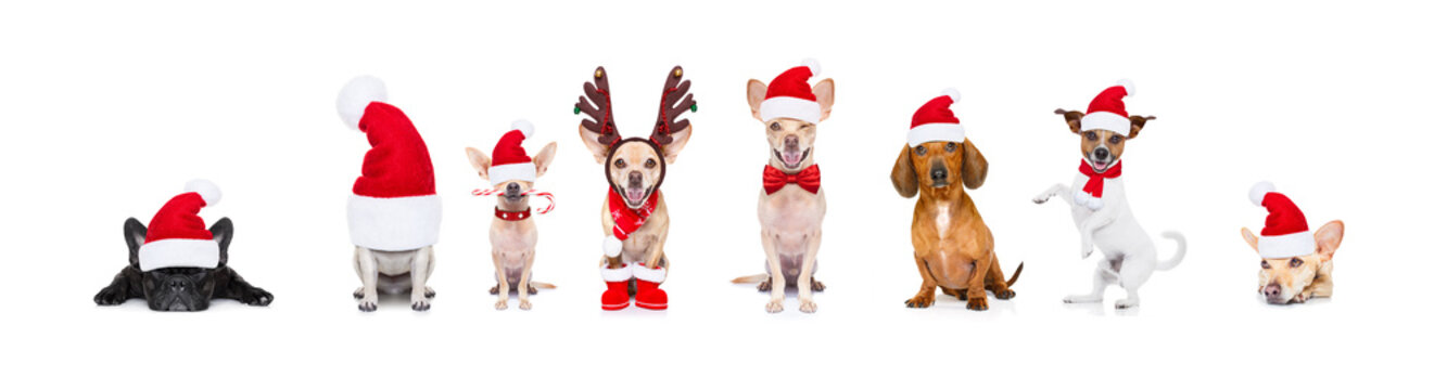 big team row of dogs on christmas holidays