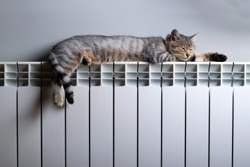 A tiger cat relaxing on a warm radiator