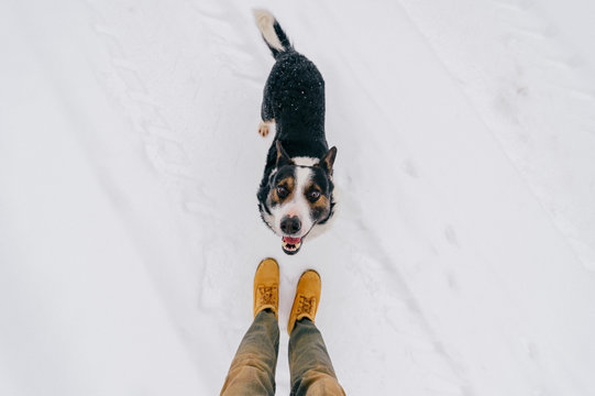 Portrait from above of kind human`s friend - faithful dog looking up at owner with funny smiling muzzle and ready to play. Cute puppy showing tongue and waiting for food. Happy pet in snow outdoor.