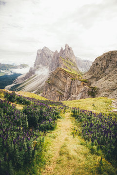 A field of purple flowers surrounded by mountains