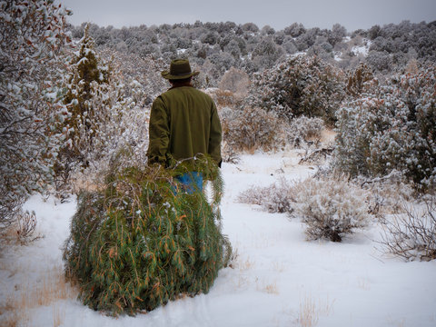 Rugged man hauling freshly harvested christmas tree in snowy desert landscape horizontal