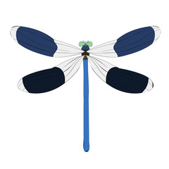 vector, isolated, dragonfly insect
