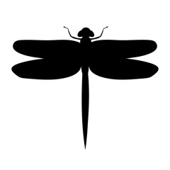 silhouette dragonfly, insect
