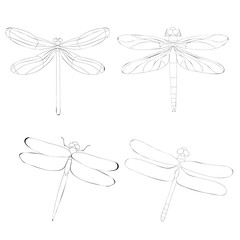 dragonfly, insect, sketch, contour