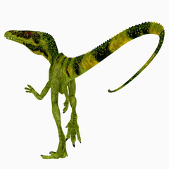 Juravenator Dinosaur Tail - Juravenator was a carnivorous theropod dinosaur that lived in Germany during the Jurassic Period.