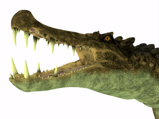 Kaprosuchus Reptile Head - Kaprosuchus was a carnivorous crocodile that lived in Niger, Africa during the Cretaceous Period.