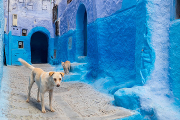 Africa,Morocco, Chefchaouen or Chaouen. Dog and cat greet each other.