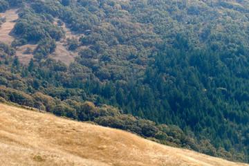 Dolason prairie mosaic redwood forest/douglas fir and Oregon white oak grassland, Bald Hills Road, Redwood National Park, California, USA