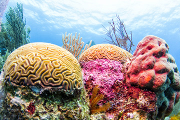 Door stickers Coral reefs Coral Reef, Belize - Colorful Barrier Reef Photo