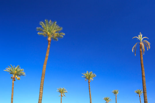 exotic and tropical background or wallpaper for poster from Las Vegas