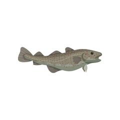 Cartoon icon of large Atlantic cod. Marine fish. Fresh seafood. Culinary theme. Detailed flat vector design