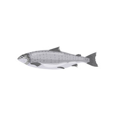 Detailed flat vector icon of fresh salmon fish. Tasty marine product. Seafood theme