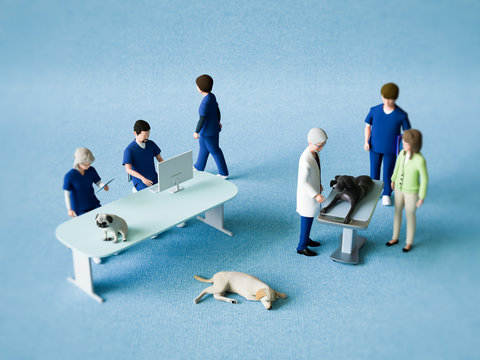 動物病院スタッフ