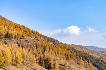Mountains and forests in autumn