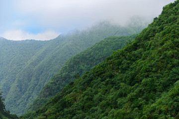 Forested mountains in a fog. Madeira, Portugal