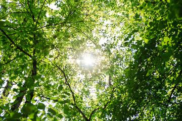 Sun Shining Through Green Leaves Of Trees