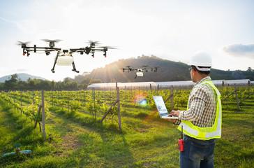 Technician farmer use wifi computer control agriculture drone fly to sprayed fertilizer on grape field, Smart farm concept
