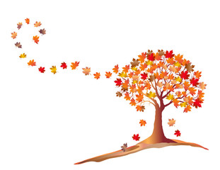 Orange Autumn Maple Tree With Falling Leaves isolated on White Background.  Elegant Design with text space. Vector and raster format available.