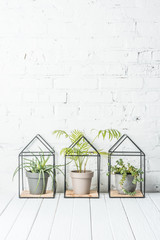 green plants in pots on wooden table near white brick wall