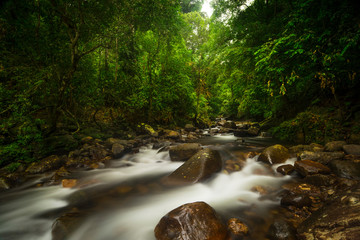 Photo sur Plexiglas Jungle Asian tropical rainforest