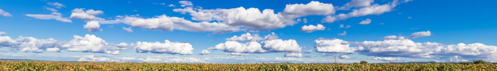 Panorama de grand ciel bleu et nuages au-dessus des vignes .