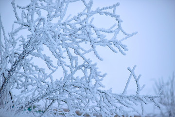 The frost on the branches of plants. Winter nature. Cold weather. Climate change. The Northern cold