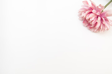 Minimal styled flat lay with pink flower on a white background. Mock up top view isolated on white.