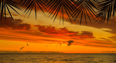 Ocean tropical sunset seen through silhouettes of palm branches