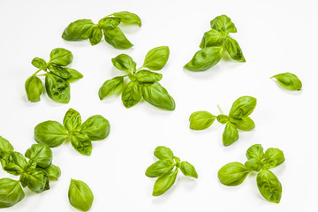 Multiple basil leaves isolated, aerial view