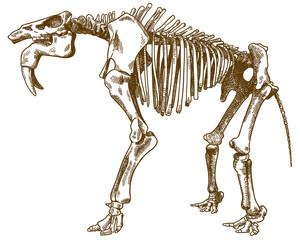 engraving illustration of deinotherium skeleton