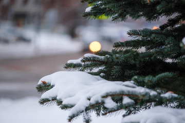 Image of a winter pinetree