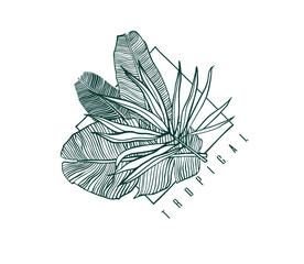 Icon with palm and banana leaf. Outline drawing of tropical leaves. Nature label with exotic foliage. Vector illustration.