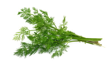 Branch of the dill herb isolated over the white background.