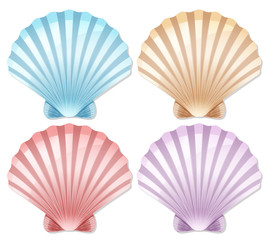 Set of color scallop shell