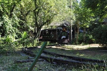 trem na floresta, train in the forest