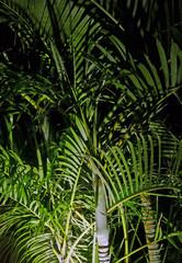 Palm foliage at night